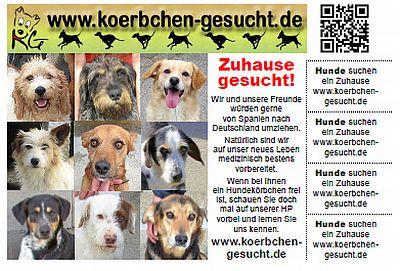 hunde vemisst in euskirchen online